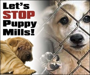 101410xPuppy-Mills-Cover-101410